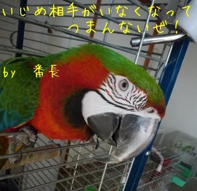 f0177261_10471719.jpg