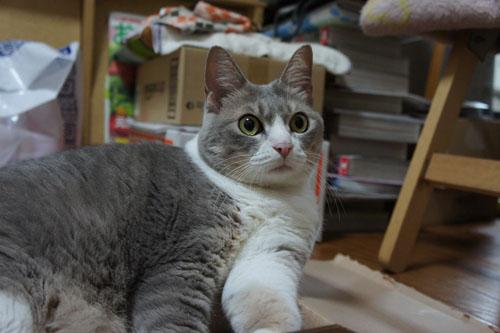 箱猫と外猫_b0083267_155521.jpg