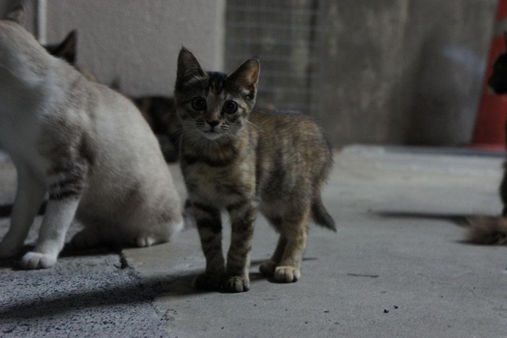 箱猫と外猫_b0083267_161542.jpg