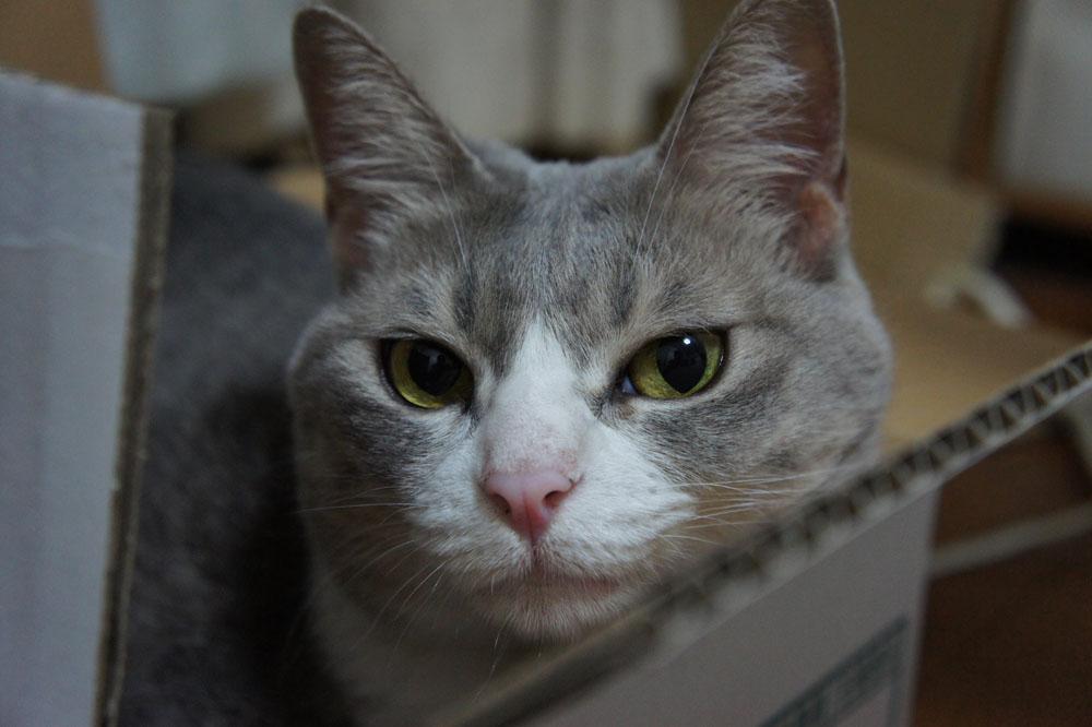 箱猫と外猫_b0083267_16371.jpg
