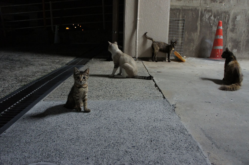 箱猫と外猫_b0083267_16959.jpg