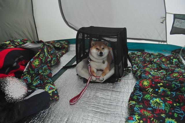 戸隠でキャンプ!!4日目_a0126590_4162063.jpg