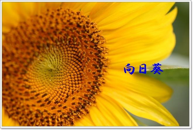 c0189890_23164648.jpg