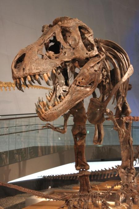恐竜図鑑#4 ティラノサウルス・レックス_f0229508_10551014.jpg