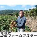 各農園の様子:安納芋