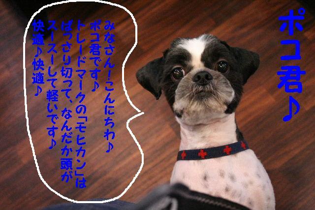 b0130018_1421372.jpg