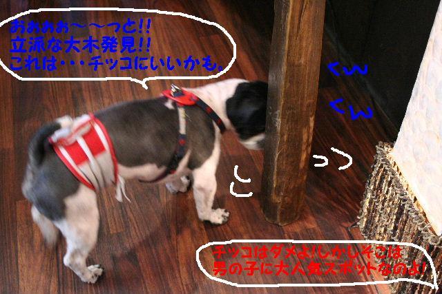 b0130018_142267.jpg