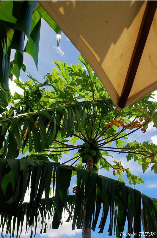 THE AMARTA・アマルタの植物たち…_c0179025_13582839.jpg