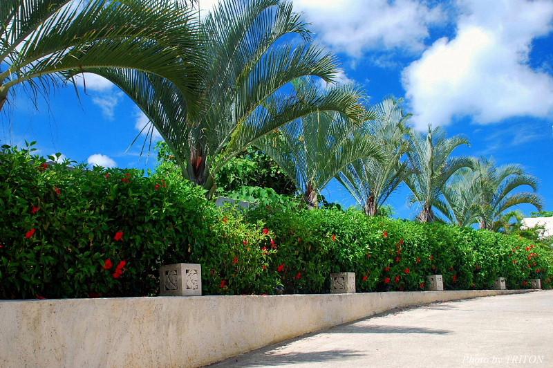 THE AMARTA・アマルタの植物たち…_c0179025_1423889.jpg