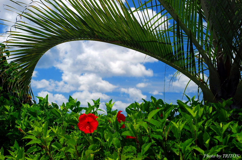 THE AMARTA・アマルタの植物たち…_c0179025_14242743.jpg