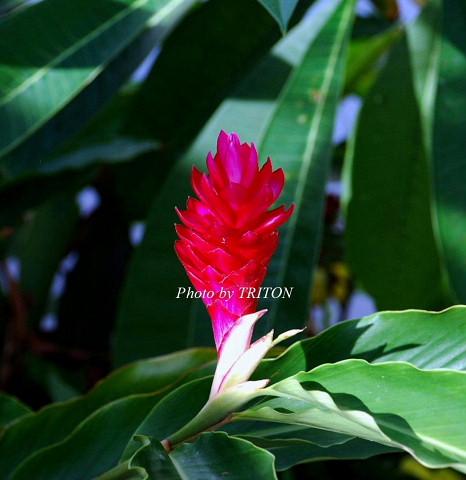 THE AMARTA・アマルタの植物たち…_c0179025_1473785.jpg