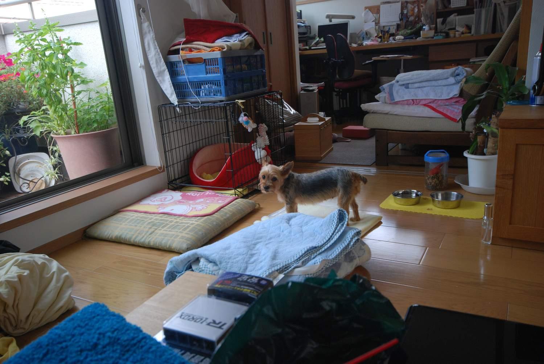 盆休みのコムギ_b0069128_21211393.jpg