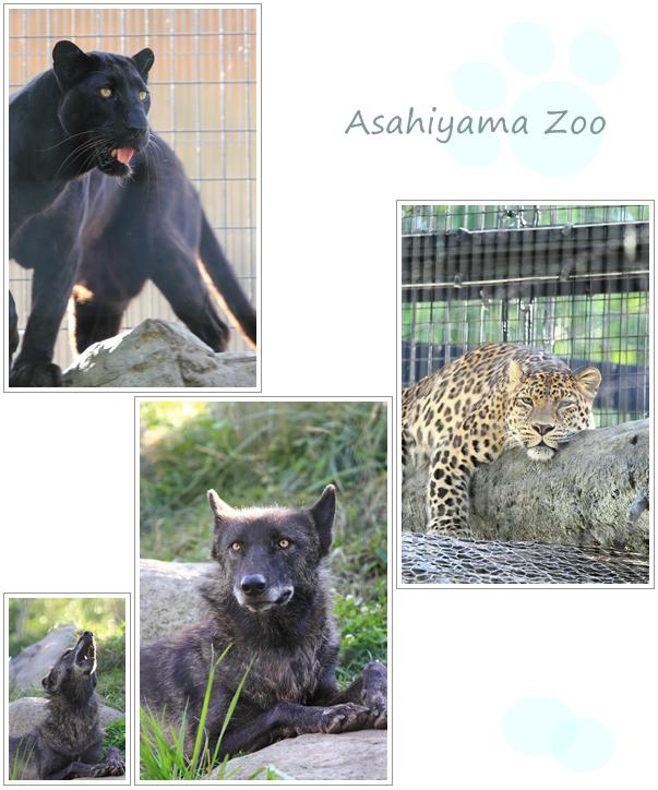 旭山動物園♪_a0097840_0193595.jpg