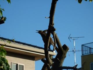 そと鳥のお友だち バードレスキューゆきねこ編。_a0143140_21293790.jpg