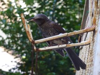 そと鳥のお友だち バードレスキューゆきねこ編。_a0143140_21362064.jpg