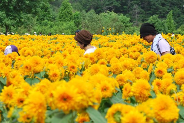 世羅高原農場_b0146751_84527.jpg