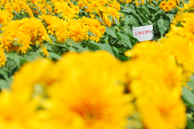 世羅高原農場_b0146751_851792.jpg