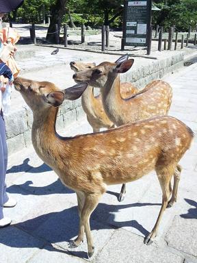 奈良旅行日記。_d0128268_8384586.jpg