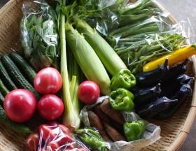 8月4週目の野菜セット不定期便のお知らせ _c0110869_22241058.jpg