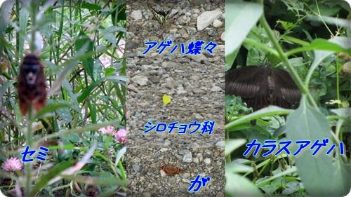 b0149071_19564297.jpg