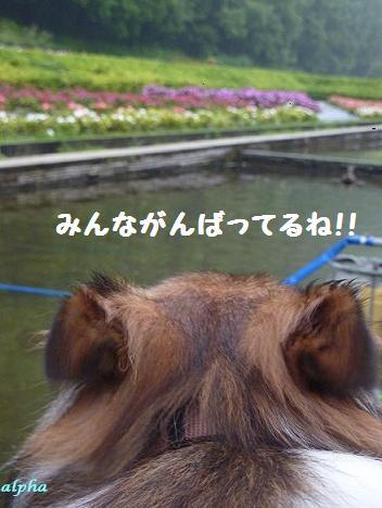 c0189388_1554971.jpg