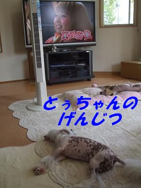 f0179203_783262.jpg
