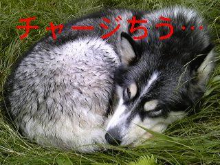 f0148927_19285942.jpg