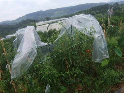 秋野菜の準備開始......種まき!_b0137932_451274.jpg