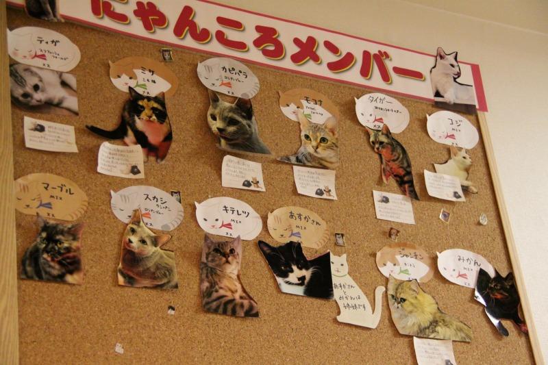 秋葉原「猫カフェ にゃんころ」_d0167436_23115577.jpg