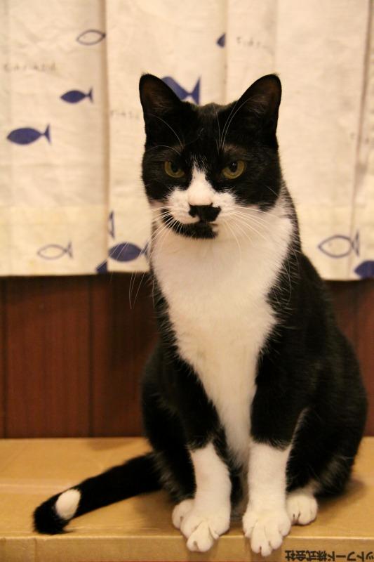 秋葉原「猫カフェ にゃんころ」_d0167436_2312388.jpg