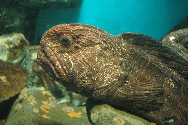 のとじま水族館は雨だった_b0057679_8521415.jpg