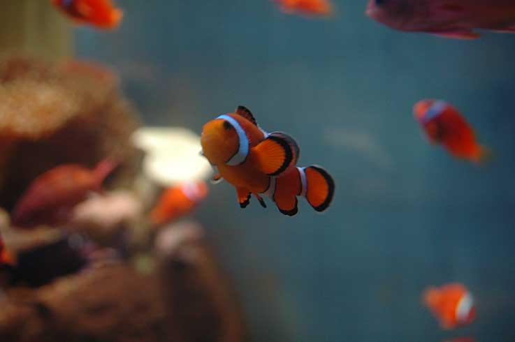 のとじま水族館は雨だった_b0057679_8523288.jpg