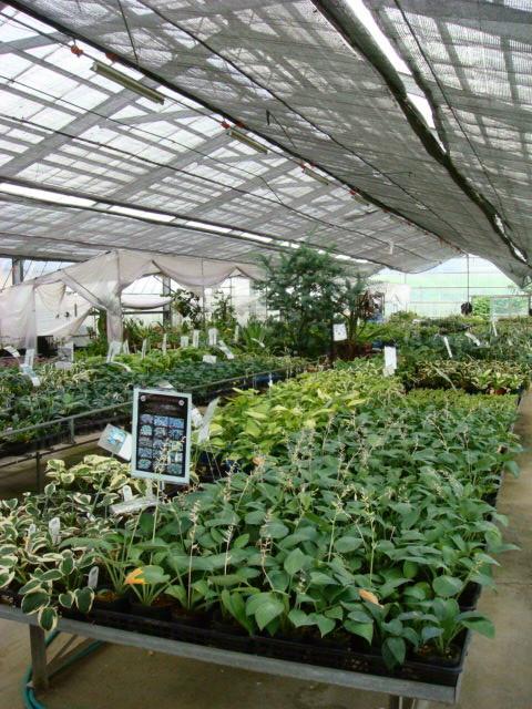 ◆軽井沢の休日・・・・① ヴィラデスト & おぎはら植物園_e0154682_175138.jpg