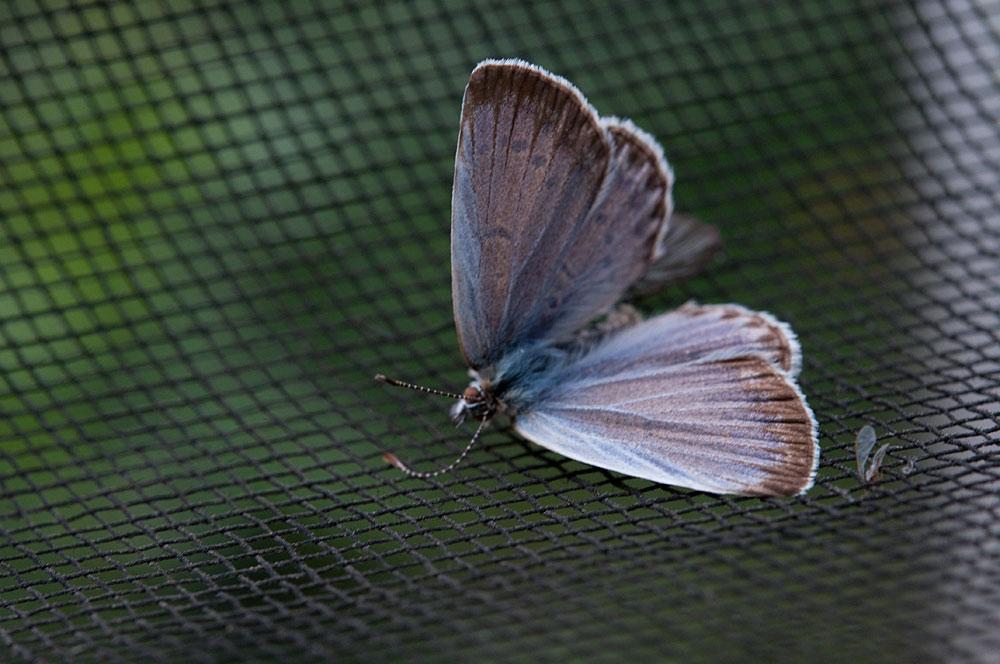 私設昆虫記-58 生と死の差分_f0215695_1228178.jpg