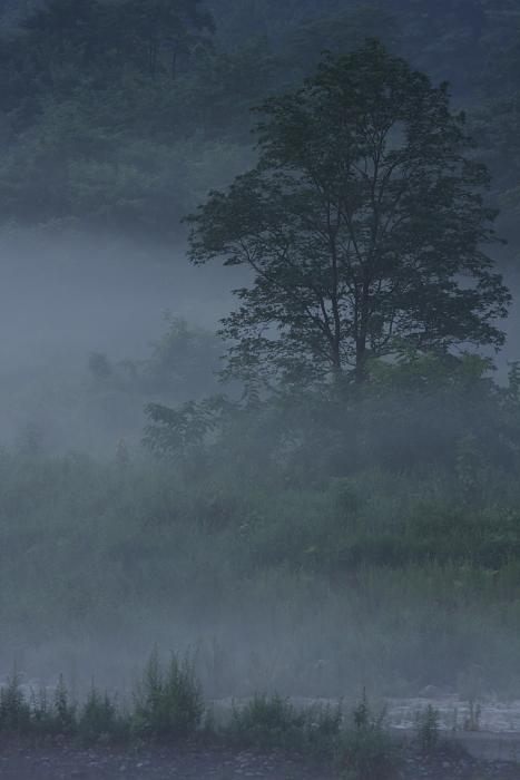 霧の予感_b0116600_0175977.jpg
