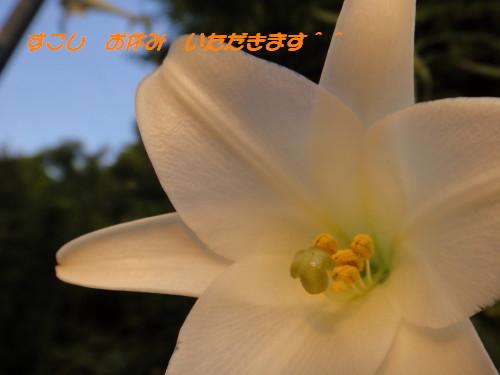 c0145304_040811.jpg