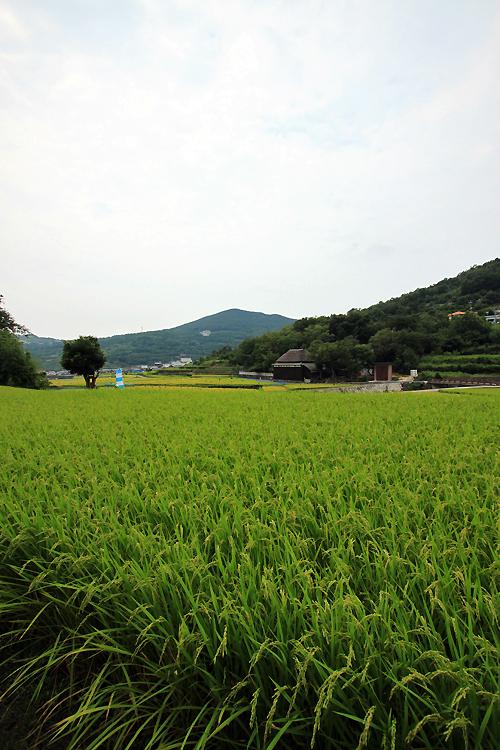 小豆島時間_e0149941_11195280.jpg