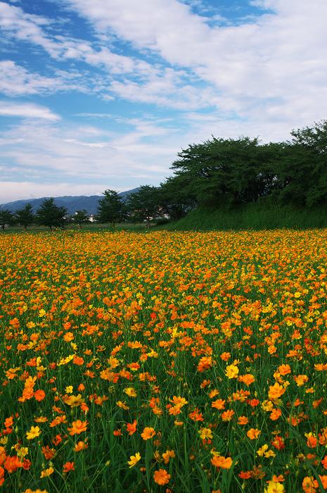 花畑のある風景(藤原宮跡)_f0155048_13503999.jpg