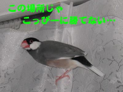 b0158061_21184841.jpg