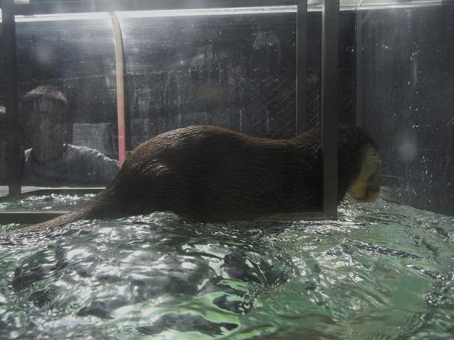上野動物園 Part1_d0105967_1852236.jpg