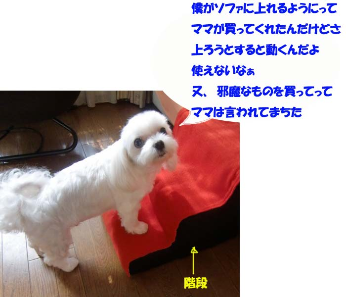 b0060071_1245553.jpg