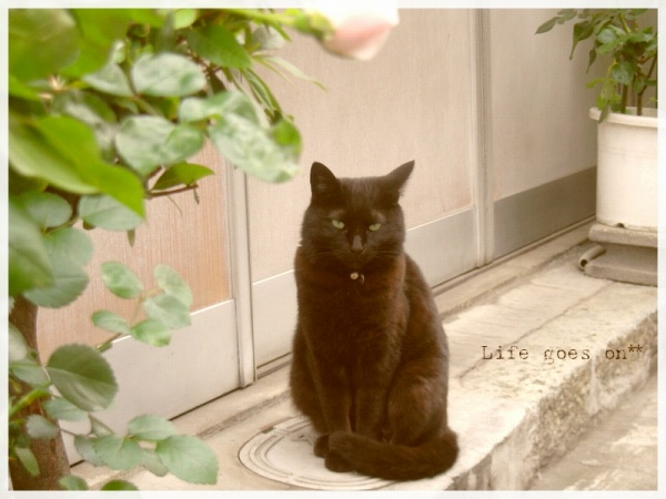 猫の街、中崎町のニャコ(=´∇`=)_b0155684_16383935.jpg