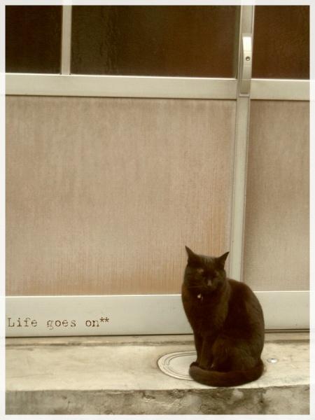 猫の街、中崎町のニャコ(=´∇`=)_b0155684_16383967.jpg