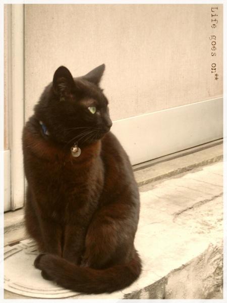 猫の街、中崎町のニャコ(=´∇`=)_b0155684_163840100.jpg