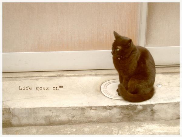 猫の街、中崎町のニャコ(=´∇`=)_b0155684_16384018.jpg
