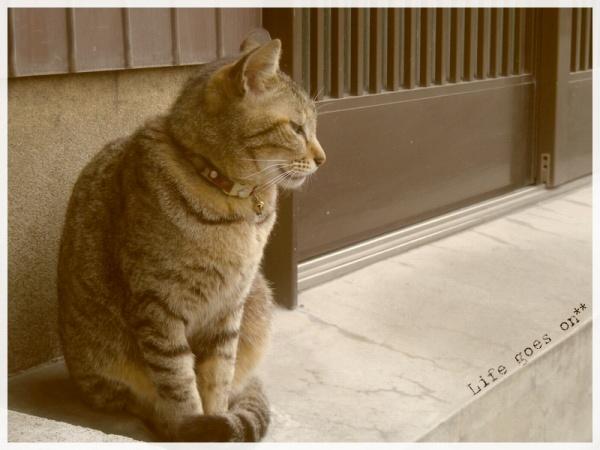 猫の街、中崎町のニャコ(=´∇`=)_b0155684_16384119.jpg
