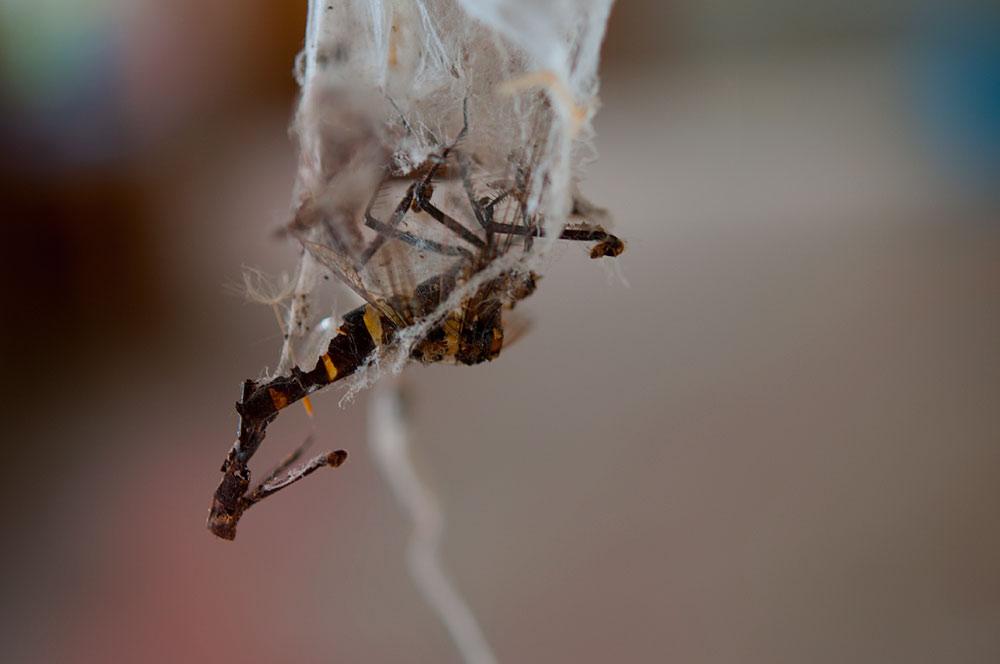 私設昆虫記-59 生と死の差分_f0215695_16531075.jpg