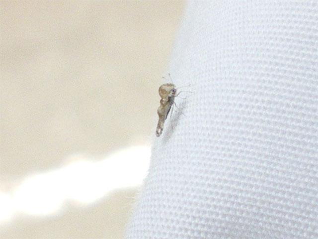 子供が、痛いと感じるといつもこの虫がいるそうです_b0025008_22273629.jpg