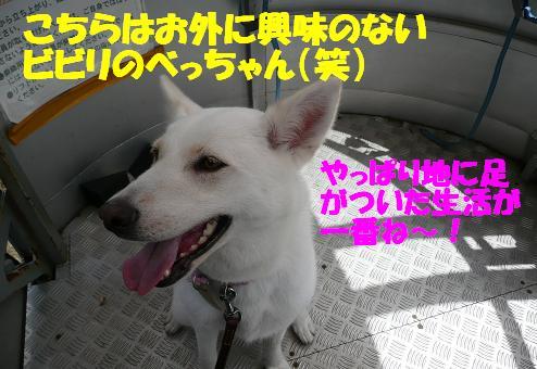 f0121712_855261.jpg
