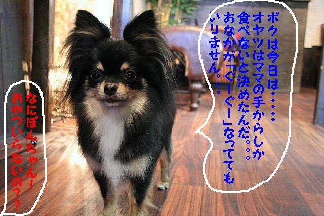 b0130018_13375521.jpg